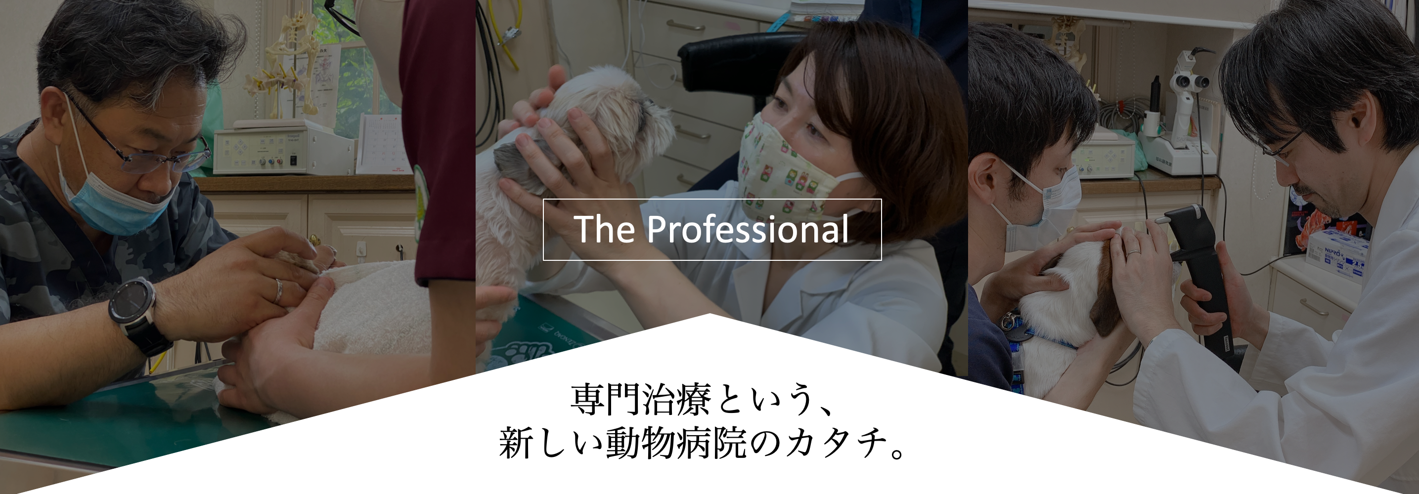りんごの樹動物病院 | 愛知県安城市の動物病院です